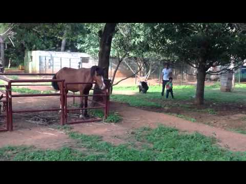 Animals overview at martins farm Whitefield Bangalore