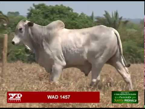 LOTE 40 - WAD 1457