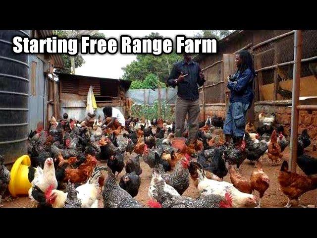 Starting a Free Range Poultry Farm
