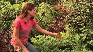 Permaculture Paradise:  Val