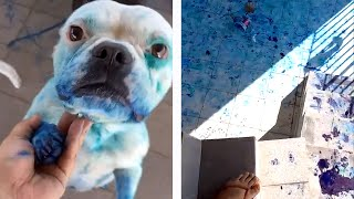 Guilty Dogs Getting Caught!  Best Moments
