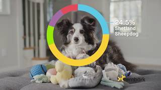 Discover Your Dog's Story With Embark! thumbnail