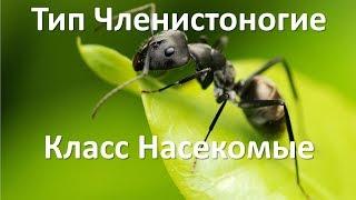10.4 Насекомые (7 класс) - биология, подготовка к ЕГЭ и ОГЭ 2019