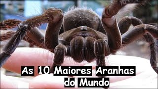 AS 10 MAIORES ARANHAS DO MUNDO