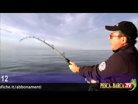 Come pescare a traina col vivo