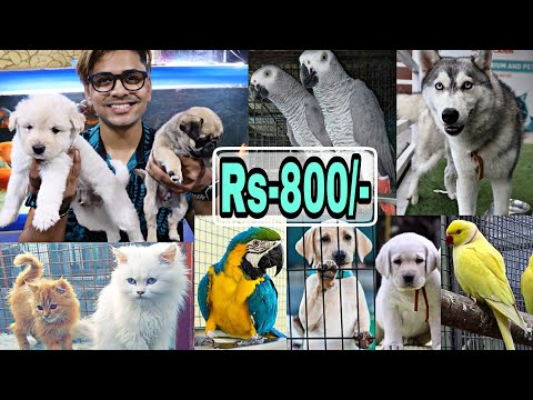 Pet Market in Hyderabad | BEST 😱🔥| Dogs For sale | Persian c