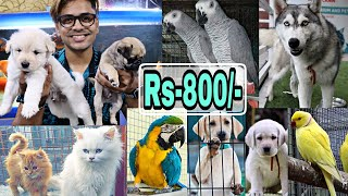 Pet Market in Hyderabad   BEST 😱🔥  Dogs For sale   Persian cats   Birds market   Mushitube lifestyle