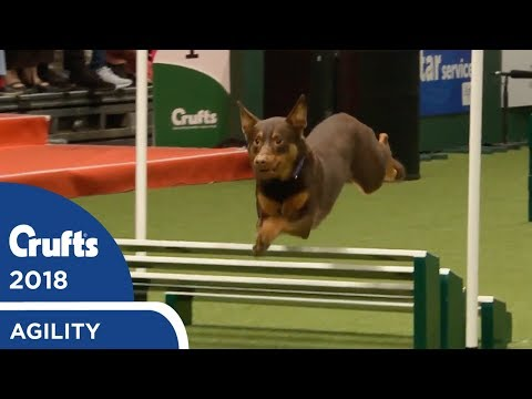 Agility - International Invitation - Large Agility | Crufts 2018