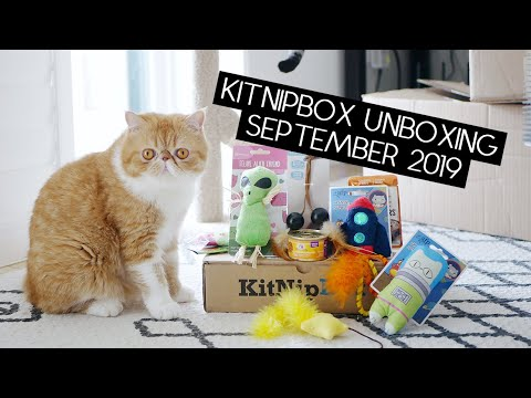 kitnipbox-unboxing-and-review-|-sven-and-robbie