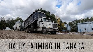 Hauling Grain Adjusting Cow Beds and Picking Bales