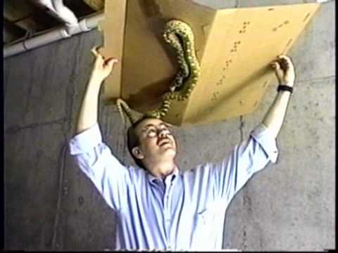 The snake guard 174 movie shows the snake trap in use youtube