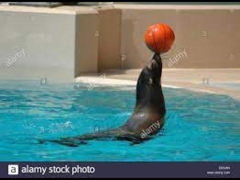 SEAL SHOW – DUBAI DOLPHINARIUM