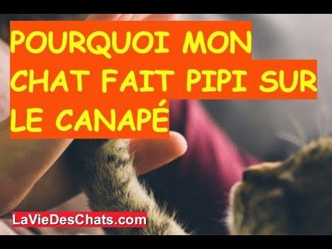 Pourquoi Mon Chat Fait Pipi Sur Le Canapé 🐱? Méthode 1/4