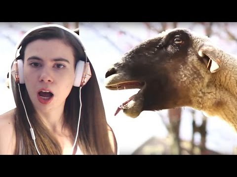 Thumbnail: REACTING TO GOATS SCREAMING LIKE HUMANS!!!
