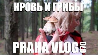 Чехия Кровь и грибы 18 Слабонервным не смотреть Praha Vlog 070