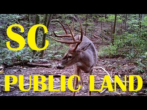 Ep. 1 - Hunting Hank - A SC Public Land Series