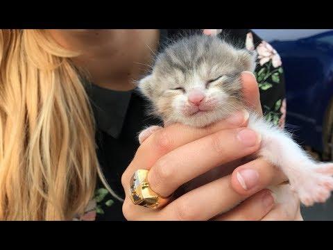 LIVE: Meet the new kittens!