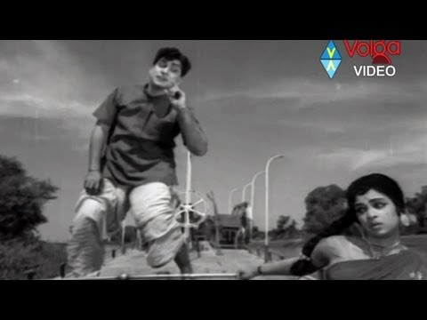 Buddhimanthudu Songs - Havvare Havva - ANR,  Vijaya Nirmala.