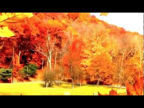 Топ 10 самых красивых фото осеньи