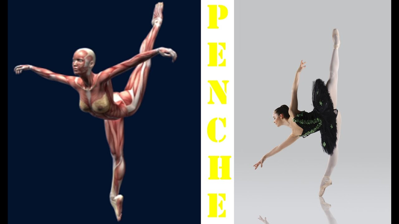How To Penche Ballet Dance Muscle Anatomy Animation Penche Ponche ...