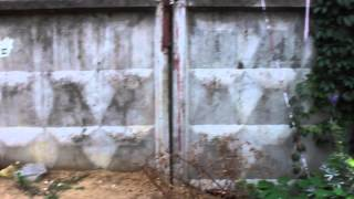Придомовая территория. Девичий виноград.(, 2015-03-12T07:55:04.000Z)