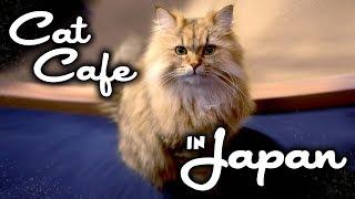 Cat Cafe Mocha in Japan! So many cute cats!