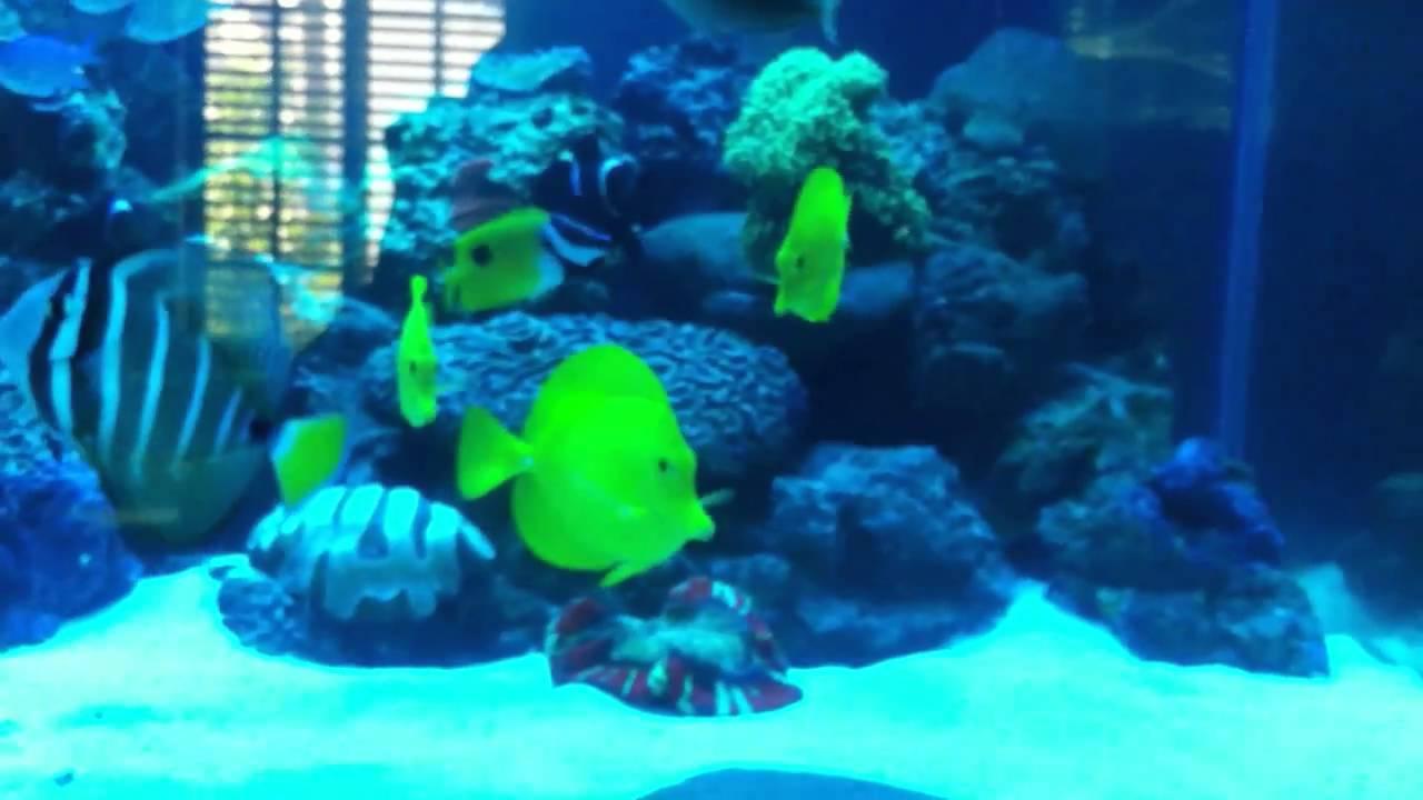 Saltwater tank frozen fish food episode 4 part 2 youtube for Saltwater fish food