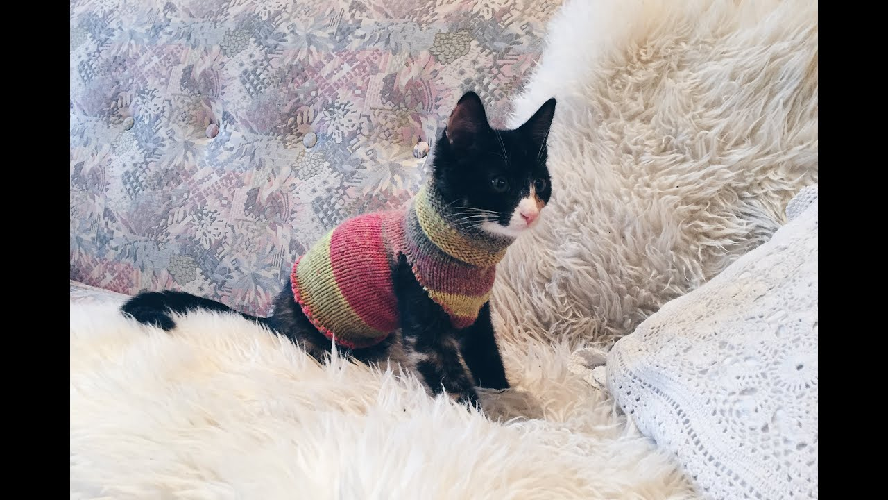 DIY Sock Sweater For Your Cat Emma The Kitten
