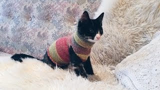 DIY Sock Sweater For Your Cat - Emma The Kitten