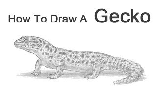 How to Draw a Leopard Gecko