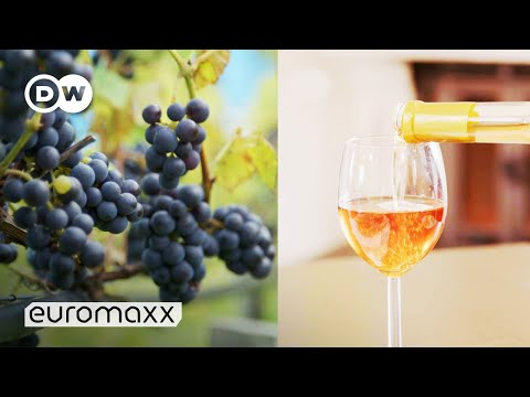 wine article Wine from Norway How Climate Change Makes Norway a Wine Country  Norwegian Wine  DW Euromaxx