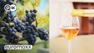 Wine from Norway? How Climate Change Makes Norway a Wine Country | Norwegian Wine | DW Euromaxx