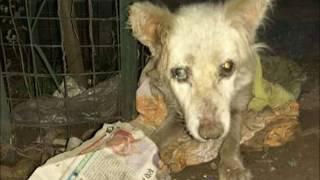 मरने के लिए छोड़ गए थे...मिली नई जिंदगी...recovery of alarmingly injured dog found waiting to die