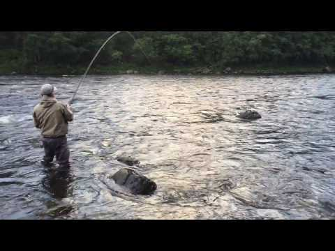 Fly fishing for salmon in orkla river 2017
