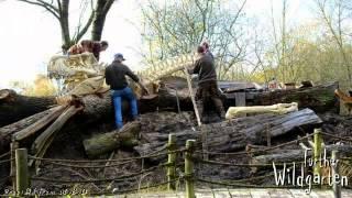 T Rex, Wildgarten Furth im Wald