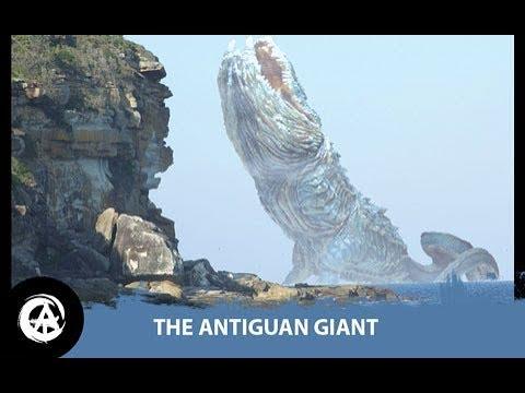 The Antiguan Giant