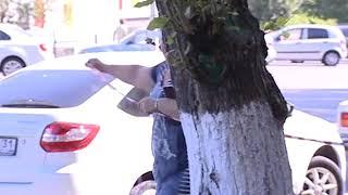 Для удобства и безопасности! Как и почему в Губкине опиливают деревья