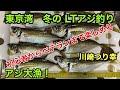 東京湾 アジ釣り 釣り船でLTアジ 初心者からベテランまで楽しめるアジ釣り 川崎 つり幸 午後船 アジ大漁‼️道具、仕掛けもご紹介‼️