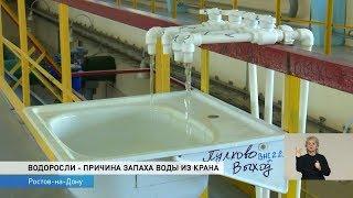 Новости-на-Дону в 18.30 от 13 июля 2018