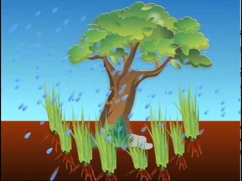 ทฤษฎีการป้องกันการเสื่อมโทรมและพังทลายของหน้าดินโดยใช้หญ้าแฝก