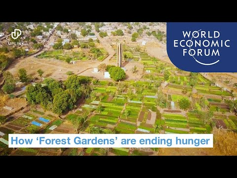 'Forest Gardens' are helping farmers end hunger | Ways to Change the World