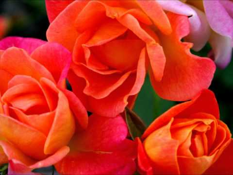 Beautiful Flower Wallpaper thumbnail