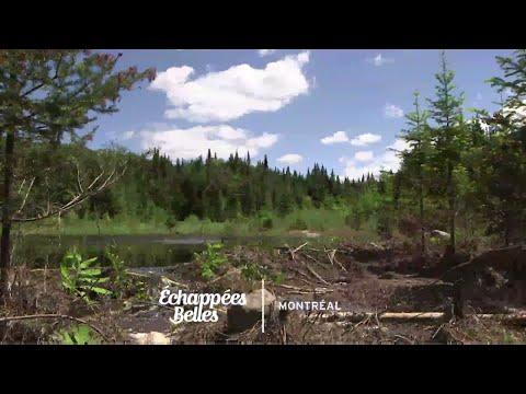 Un été à Montréal - Échappées belles