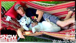happy-hammock-huskies