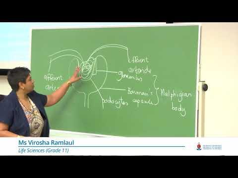 JuniorTukkie Summer School Life Sciences1