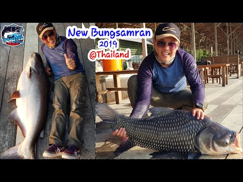 Cara Mancing Mekong Catfish And Siamese Carp At New Bungsamran, Thailand !!!