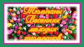 Красивые тюльпаны - весенняя мелодия тюльпанов. Видео Тюльпаны