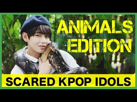 Scared K-Pop Idols: Animals Edition