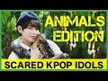 Download Scared K-Pop Idols: Animals Edition 1 MP3 song and Music Video