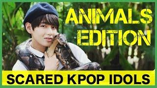 Video Scared K-Pop Idols: Animals Edition 1 download MP3, 3GP, MP4, WEBM, AVI, FLV September 2017